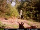 Jacked up 6 point